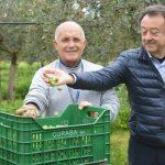 Gabiette di olive, Curaba e Di Benedetto