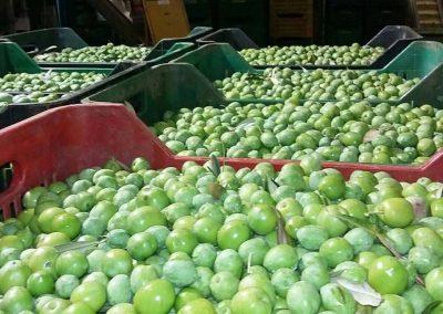 Gabiette di olive